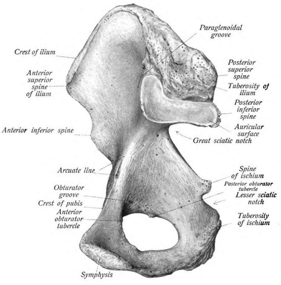 sacroiliac joint pain articular